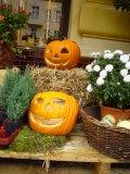 011_Halloween_pumpkins[1]