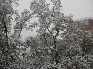 This was the Halloween snow of 2011!